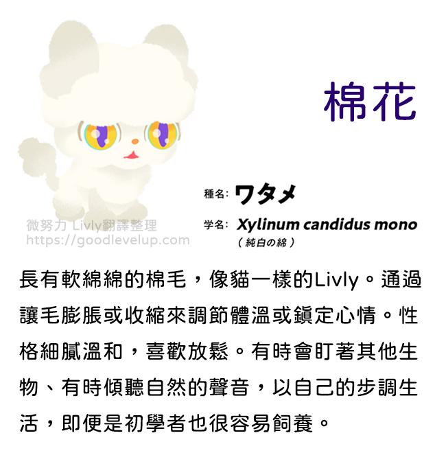 livly棉花貓